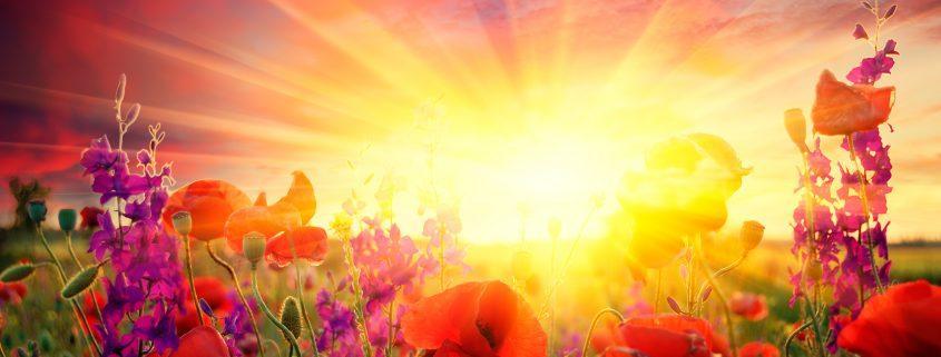 poppies and sunrise signifying eulogy and eulogy writing